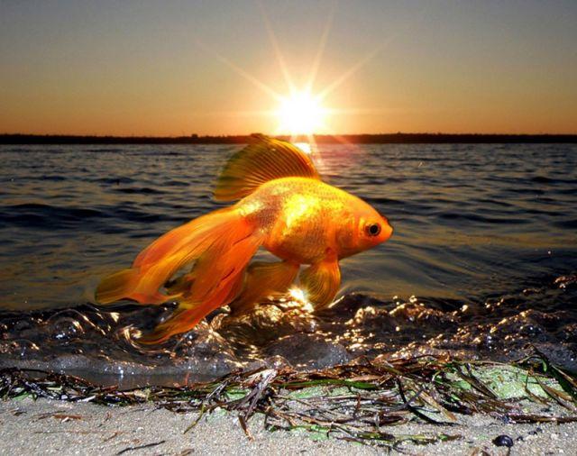 Золотая рыбка в вашей жизни